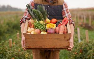 veganer kasse fyldt med gode råvare